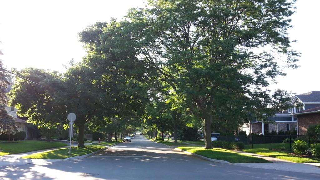 Burlington Ontario Residential Street