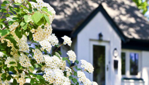 Spring Market Trends blog header