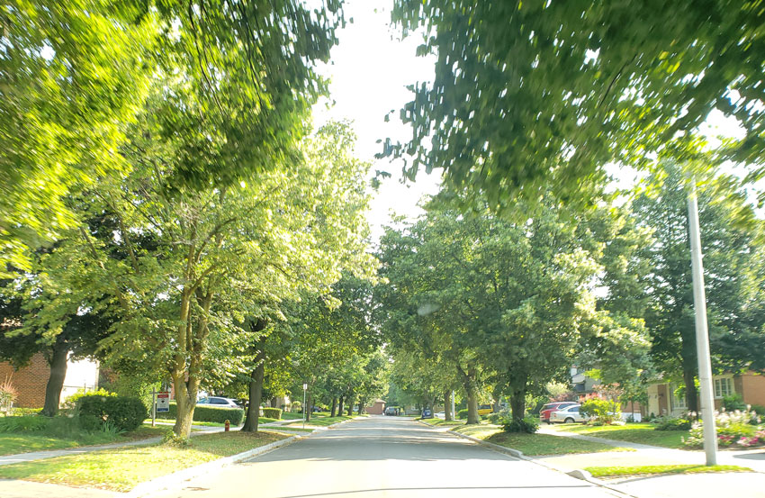 Headon Forest, Burlington, Ontario neighbourhood